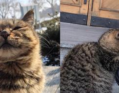 """Tan chảy cả trái tim với """" nụ cười mũm mĩm"""" của bé mèo Hoang trong công viên Hổ Siberian"""