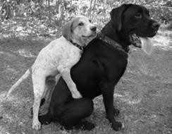 5 lợi ích bất ngờ từ quá trình triệt sản ở chó cảnh