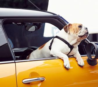 10 điều cần chuẩn bị trước khi đi chơi xa cùng cún yêu