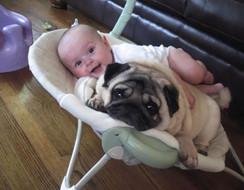 Bộ ảnh mấy chó thân với trẻ con như bạn thân lâu năm, xem là muốn ẵm một bé về nhà ngay
