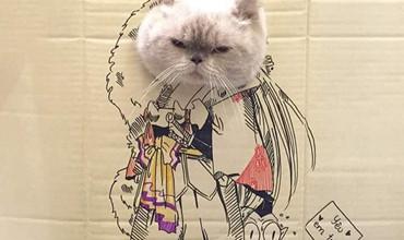 Những chú mèo cosplay thành những nhân vật Anime cực chất chỉ với tấm bìa các tông