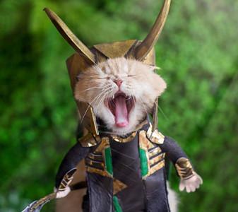 """Hoàng thượng """"Chó"""" lại tiếp tục hóa thân thành siêu anh hùng Avengers siêu ngầu"""