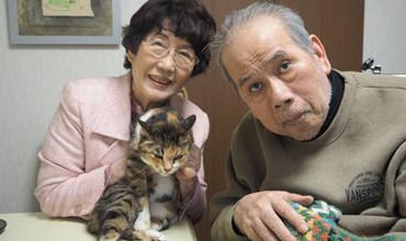 Câu chuyện về mèo và dịch vụ tìm kiếm mèo lạc chỉ có tại Nhật Bản.