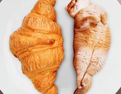 Khi mà đám mèo cosplay ngáo thành đủ món thức ăn nhìn bảo đảm yêu liền (Phần 1)